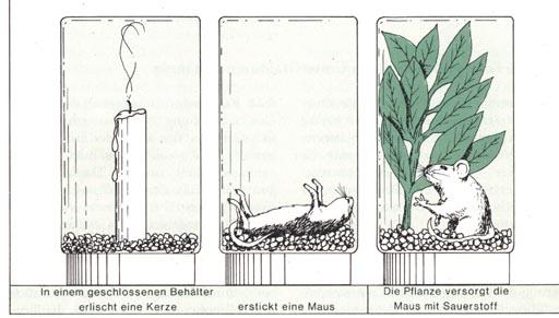 die entdeckungsgeschichte der photosynthese. Black Bedroom Furniture Sets. Home Design Ideas