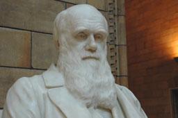 Bild rechts: marmorstatue (teilansicht) von charles darwin im natural