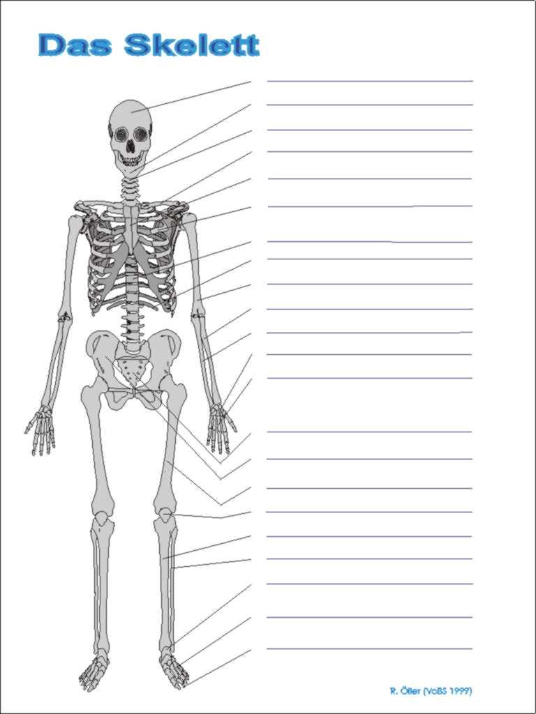 a-skelett.jpg